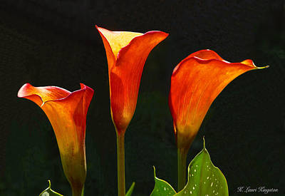 Poster featuring the photograph Flame Calla Lily Flower by K L Kingston