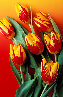 Flame Tulips Poster by Garry Gay