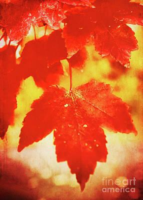 Flaming Autumn Poster