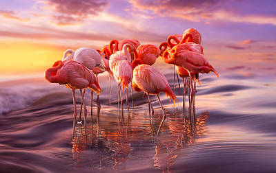 Flamingo Siesta Poster