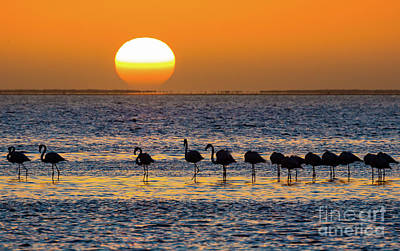 Flamingo Sunset Poster by Inge Johnsson
