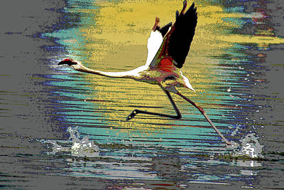 Flamingo Walking On Water Poster by Charles Shoup