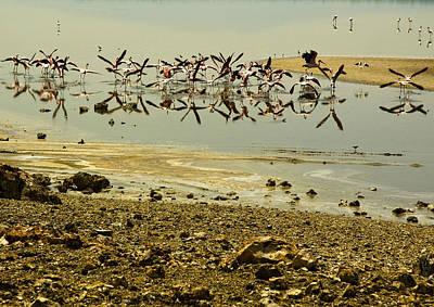 Flamingos Poster by Patrick Kain