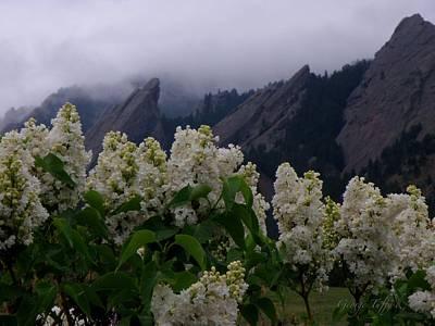 Flatirons White Lilacs Poster