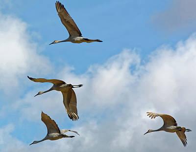 Flight Of The Cranes Poster