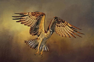 Flight Of The Osprey Poster by HH Photography of Florida
