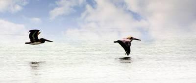 Flight Of Thepelicans Poster