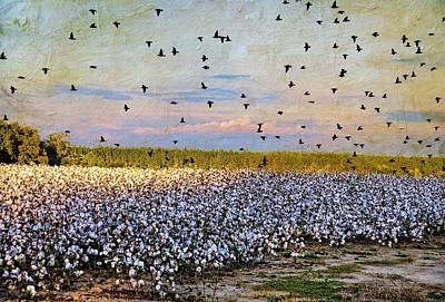 Poster featuring the photograph Flight Over The Cotton by Jan Amiss Photography
