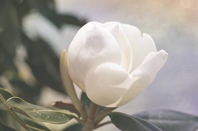 Floating Magnolia Poster