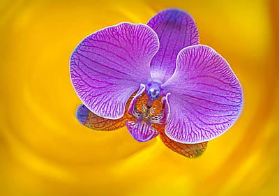 Floating Orchid Poster by Susan Candelario