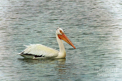 Floating Pelican Poster by Krista-