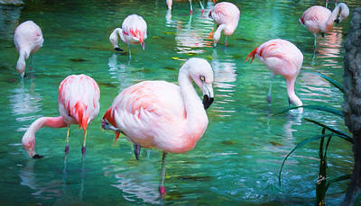 Flock Of Flamingos Poster