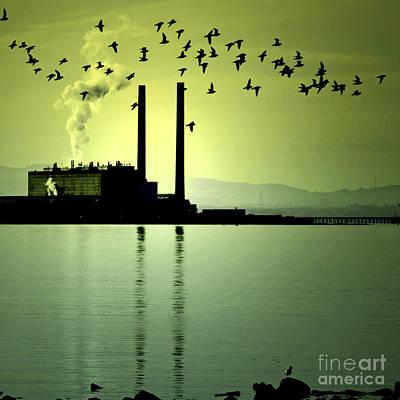 Flock Of Gulls Poster by Craig B