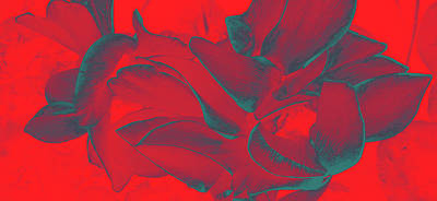 Floral Abstract In Dramatic Red Poster