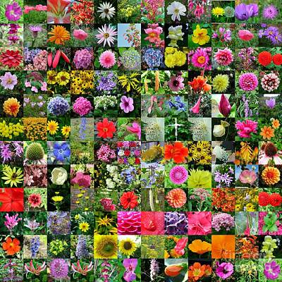 Floral Collage Poster