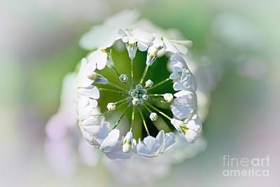 Floral Crown By Kaye Menner Poster by Kaye Menner
