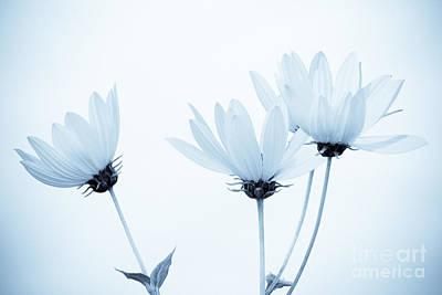 Floral Elegance Poster by Anita Oakley