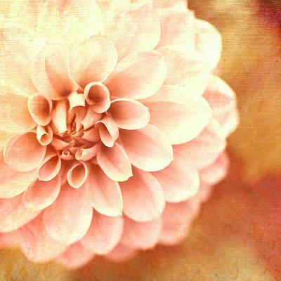 Floral Impressions Poster by Melanie Alexandra Price