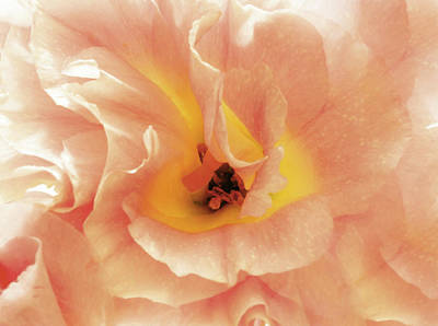 Floral Intimacy Poster by Georgiana Romanovna