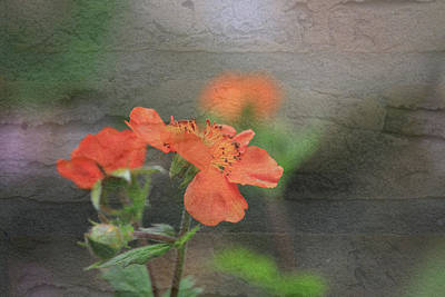 Floral Photo Of Orange Spring Flower And Texture Poster