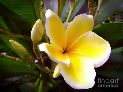 Floral Sunshine Poster