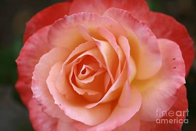Florange Poster by Stephen Mitchell