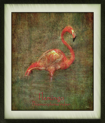 Poster featuring the photograph Florida Art by Hanny Heim
