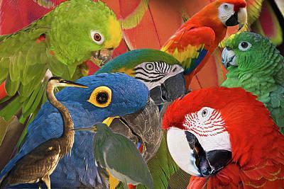 Florida Birds Poster