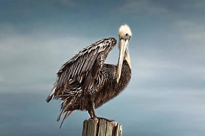 Florida Pelican Posing Poster by Kim Hojnacki