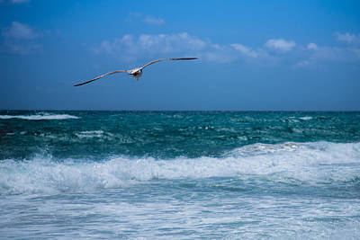 Poster featuring the photograph Florida Seagull In Flight by Jason Moynihan