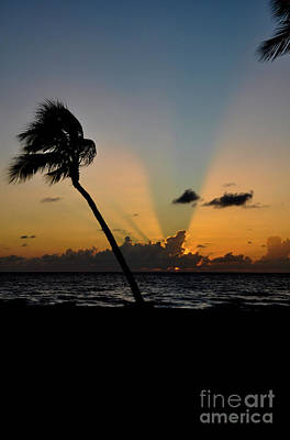 Poster featuring the photograph Florida Sunrise Palm by Kelly Wade