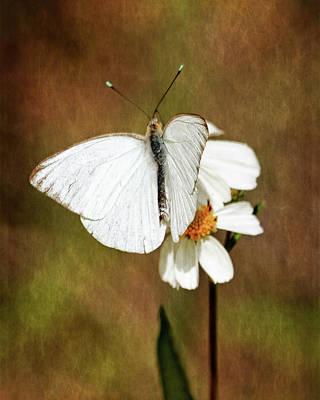 Florida White Poster