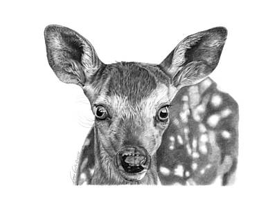 Florry The Fawn Poster