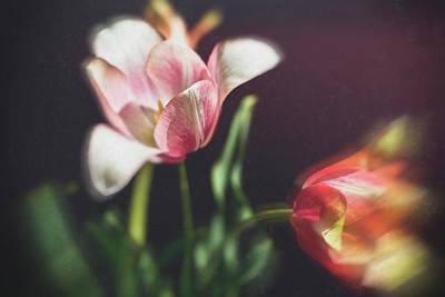 Flower-1 Poster by Okan YILMAZ