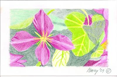 Poster featuring the drawing Flower 5 - Purple Clematis by Rod Ismay