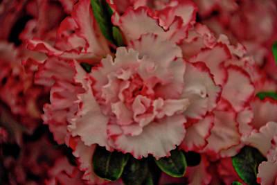 Flower 5 Poster