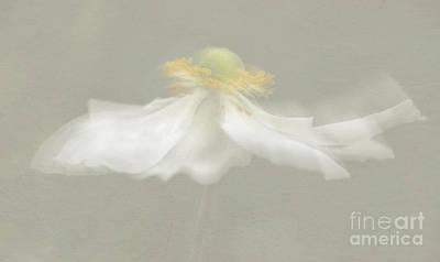 Flower Blur Poster by Amanda Elwell