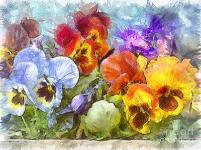 Flower Box Full Of Pansy Pencil Poster by Edward Fielding