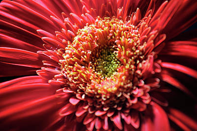 Poster featuring the photograph Flower Burst by Sheryl Thomas