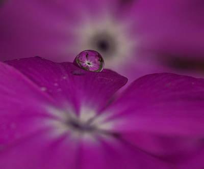 Flower Drop Poster