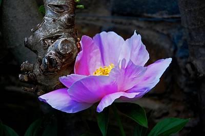 Flower. Dumbarton Oaks Gardens Poster
