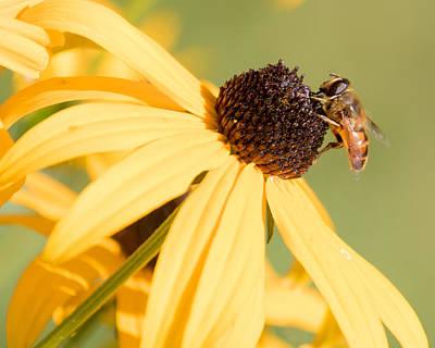 Flower Fly Poster