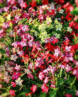 Flower Garden 1 Poster