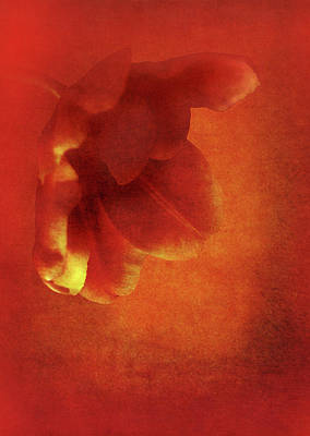 Flower In Red Poster by Johan Lilja