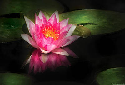 Flower - Lotus - Nymphaea Gloriosa - Intensity Poster by Mike Savad