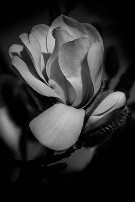 Flower Noir Poster