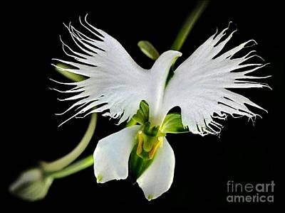 Flower Oddities - Flying White Bird Flower Poster