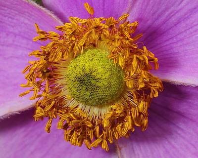 Flower Orbit Poster