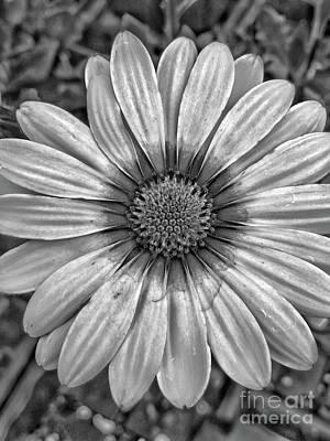 Flower Power - Bw Poster
