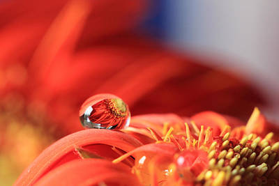 Flower Reflection In Water Drop Poster